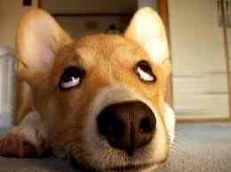 おとぼけ犬