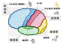 弾ける笑顔 クオーレテラピー-大脳皮質